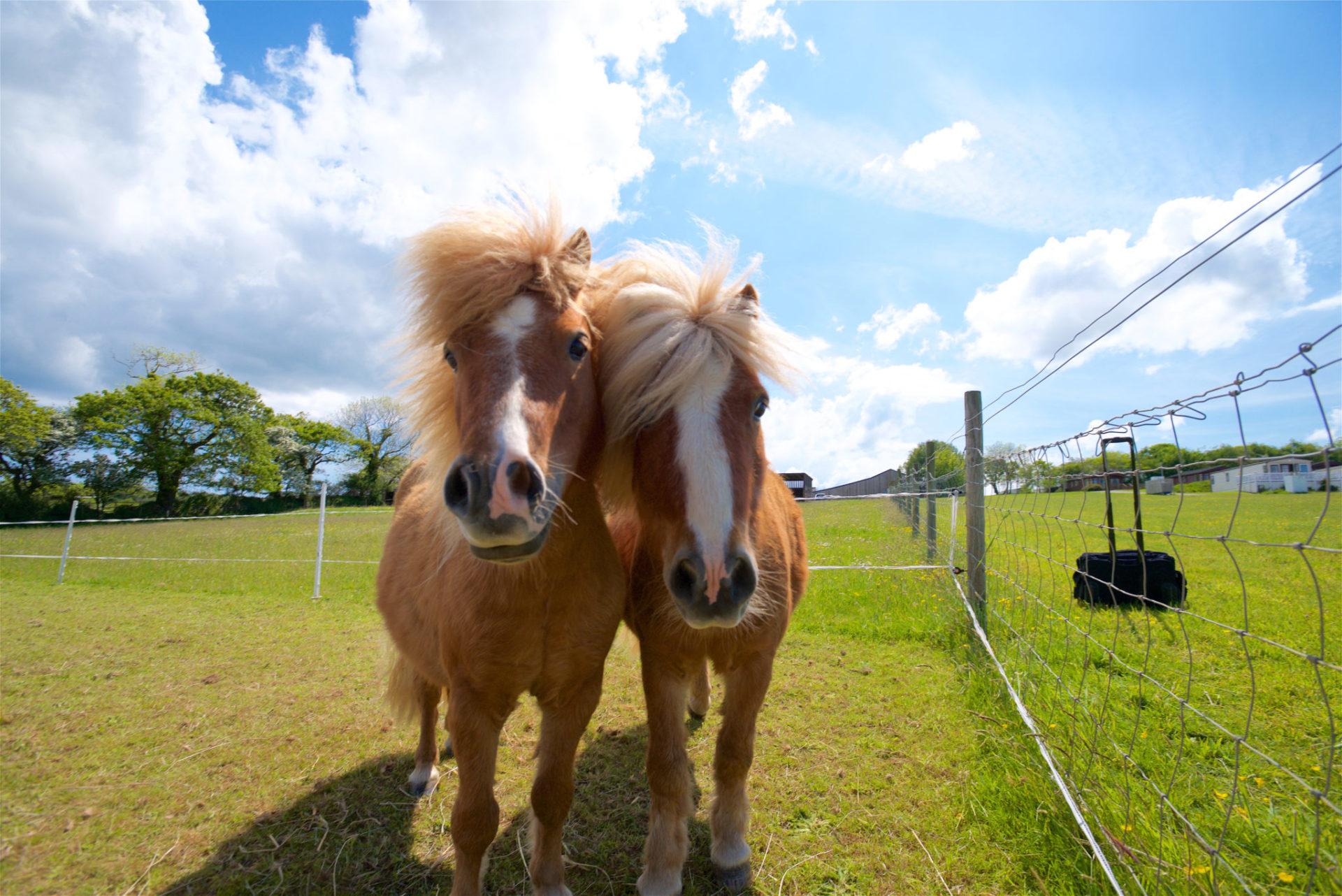 ponies at meadow lakes
